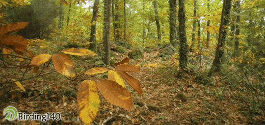 forest720x339