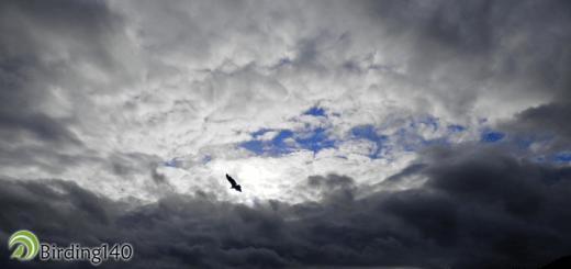 Monfragüe skies