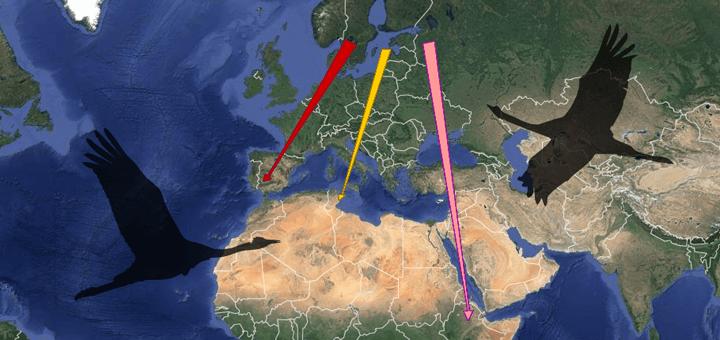 Common Crane - Migration map