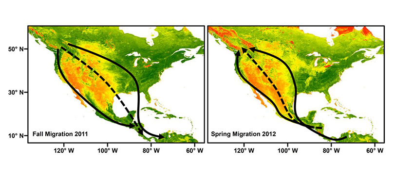 If Parents have different migratory routes, their descendants will take a route intermediate