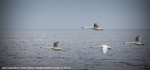 migration bird day