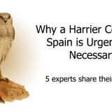 Harrier Census in Spain