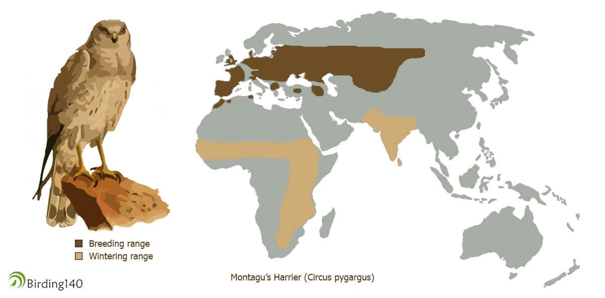 Range of Circus pygargus
